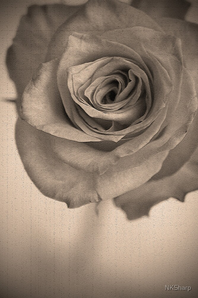 Antique Rose by NKSharp