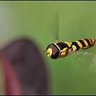 Hover Fly by Helenvandy