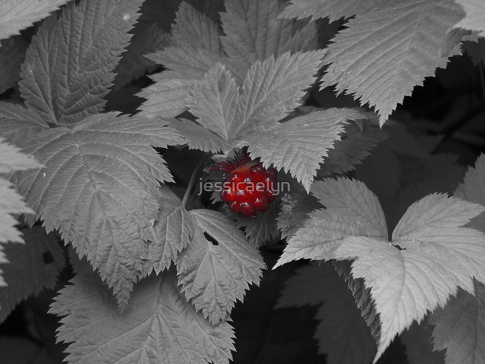 Red Raspberry - Vancouver by jessicaelyn