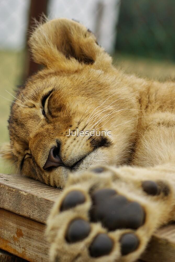 Sleeping lion by Julesdunc