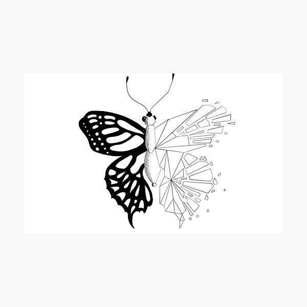 Scattered butterfly black and white - geometric black and white butterfly Photographic Print