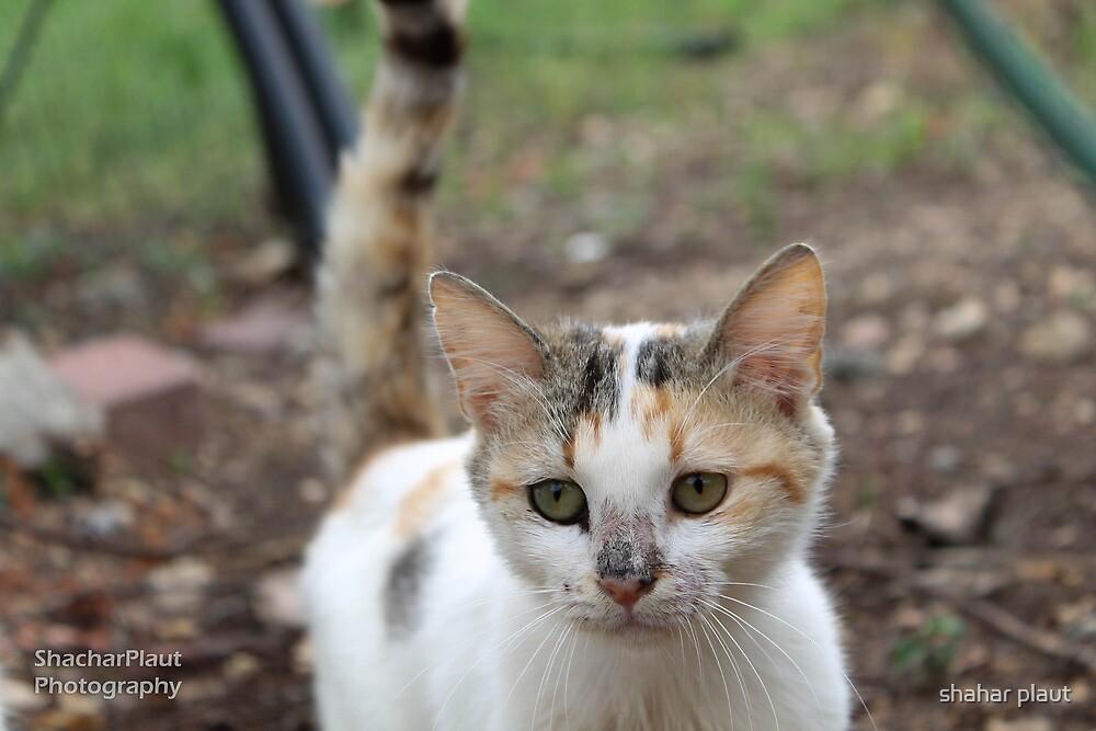 Street cat by shahar plaut