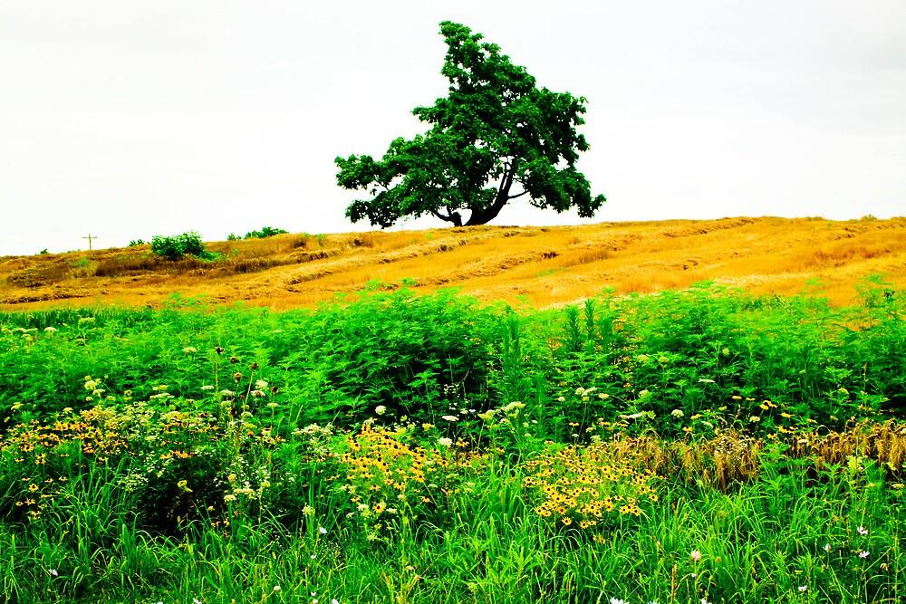 Lone Prairie by Pauline Evans