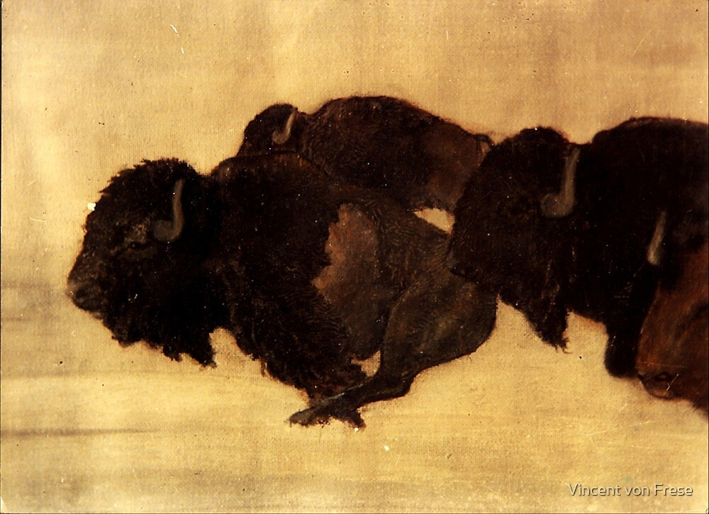 Bison by Vincent von Frese