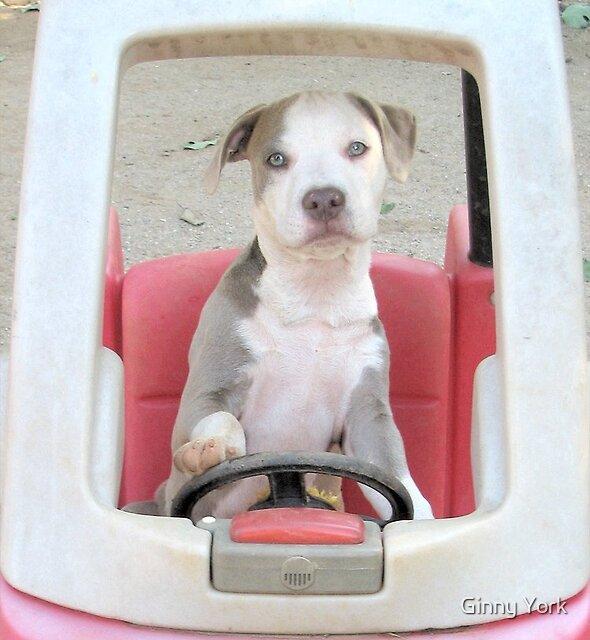 I'm On My Way Vivian! by Ginny York