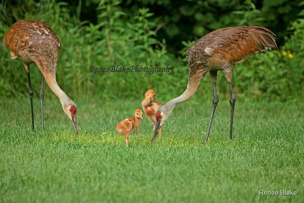 A Beautiful Family ~ by Renee Blake
