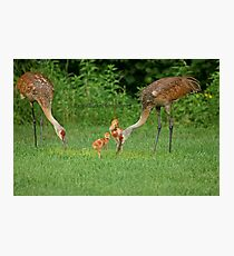 A Beautiful Family ~ Photographic Print