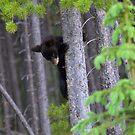 Baby bear in Tree by Luann wilslef