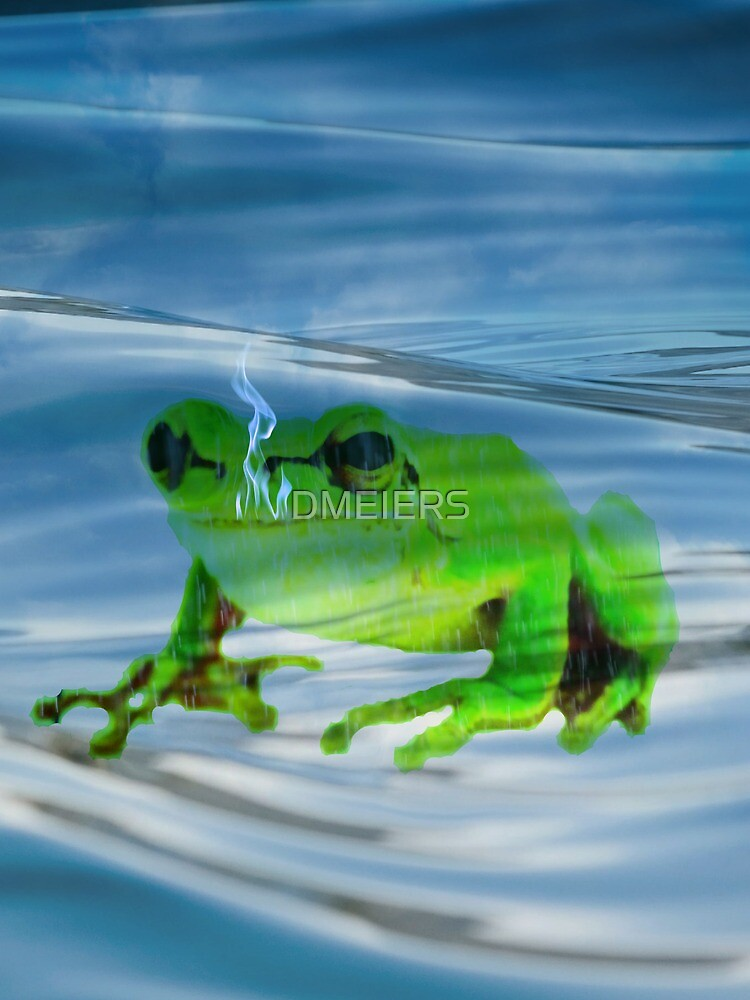 frog by DMEIERS