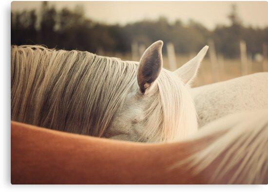 Quarter Horse Ears by jamieleigh