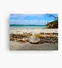 Sea Shells, Seven Mile Beach  Canvas Print