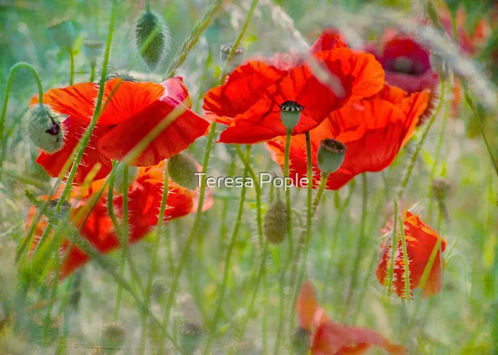 poppy love by Teresa Pople