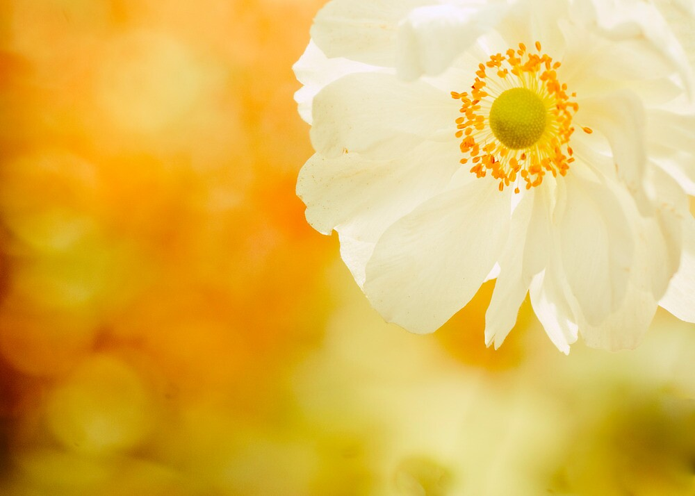 Last flower of Autumn by woodnimages
