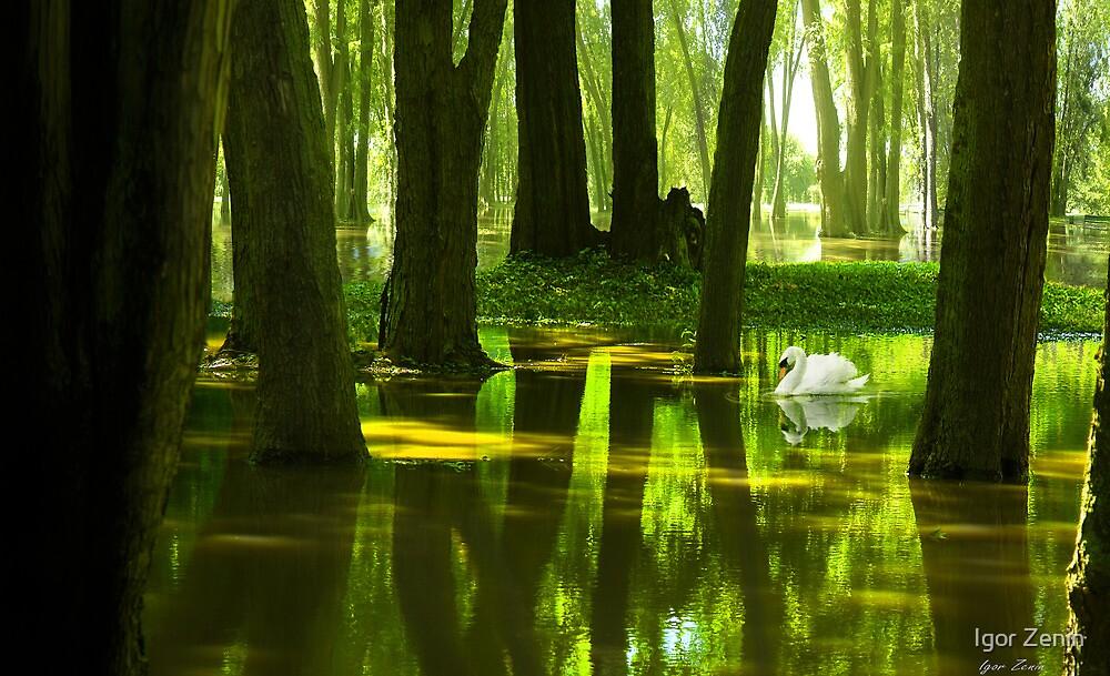 Still Waters by Igor Zenin