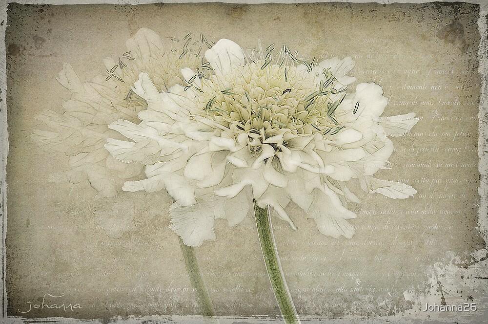 Just a flower ..  by Johanna26