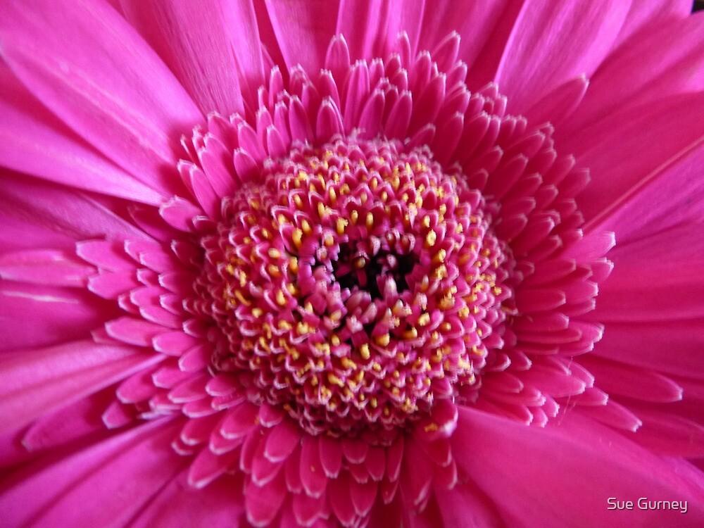 Pretty in pink by Sue Gurney