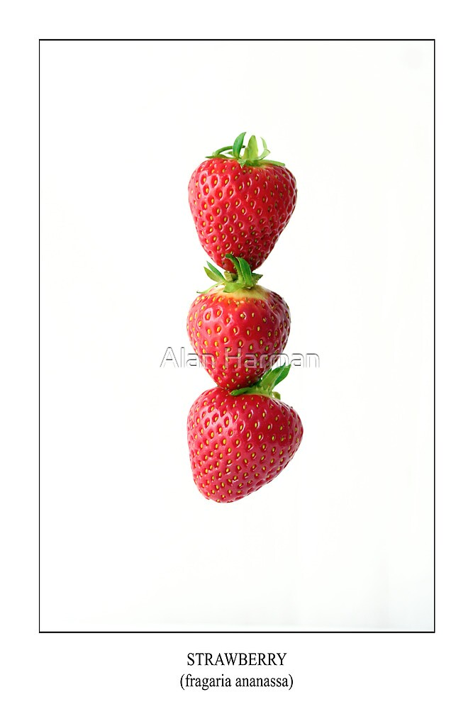 Strawberries On White Labeled by Alan Harman