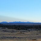 Bearpaw Mountain silhouette  by field9