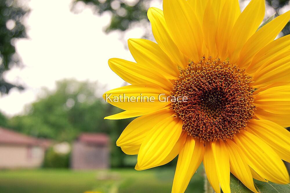 Flower by Katherine Grace