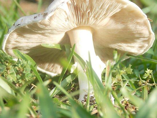 mushroom by bddupree