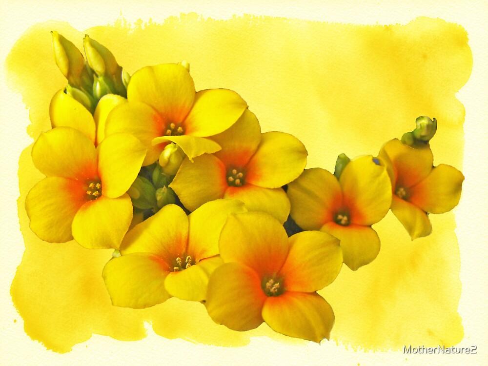 Yellow Kalanchoe - Succulent Sunshine by MotherNature2