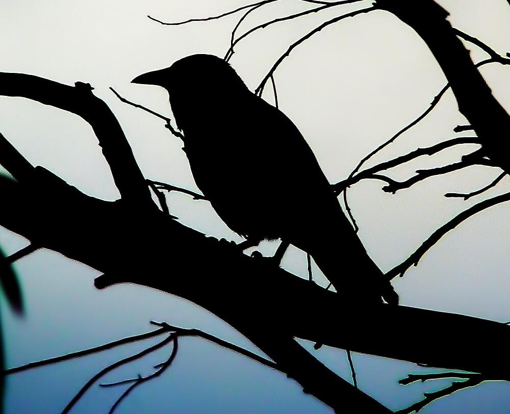Morning Blackbird by V1mage