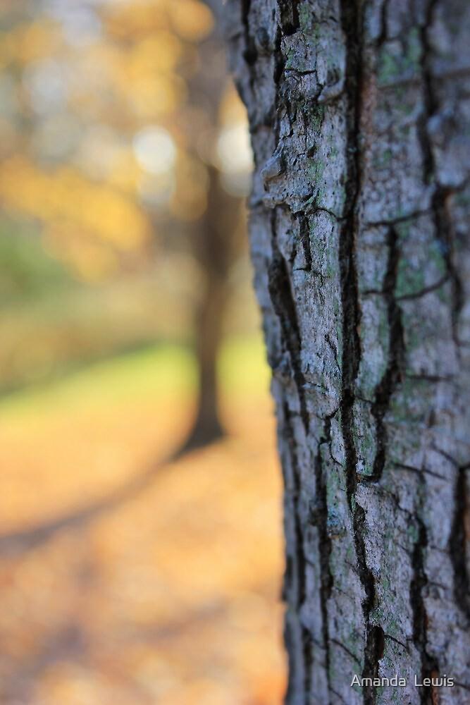 The Tree Hugger by Amanda  Lewis