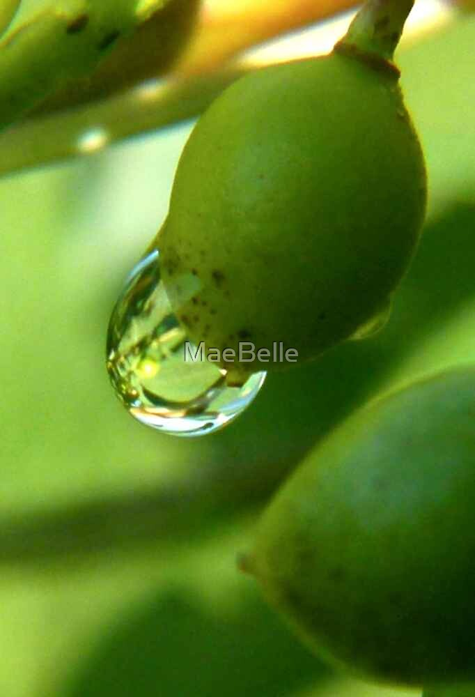 Water Drop on a Green ChockCherry by MaeBelle