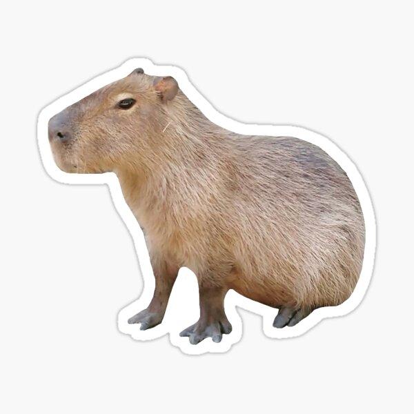 Sitting Capybara Sticker