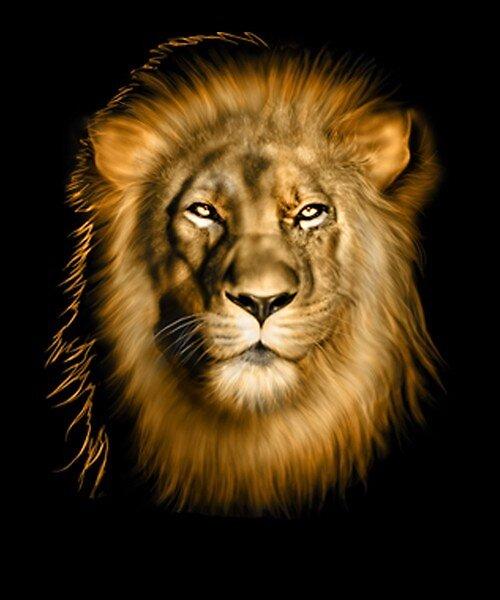 lion by cesarazcona