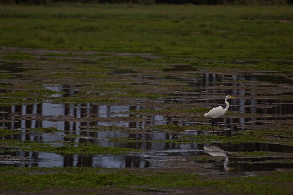 Marsh Bird by Dominic Perry