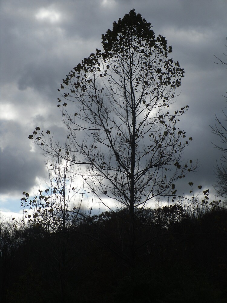 Silhouette Tree by Dominic Perry