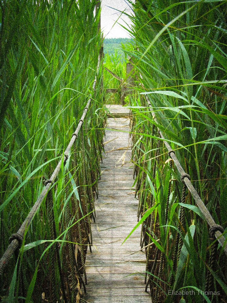 Rope Bridge over a Salt Marsh by Elizabeth Thomas
