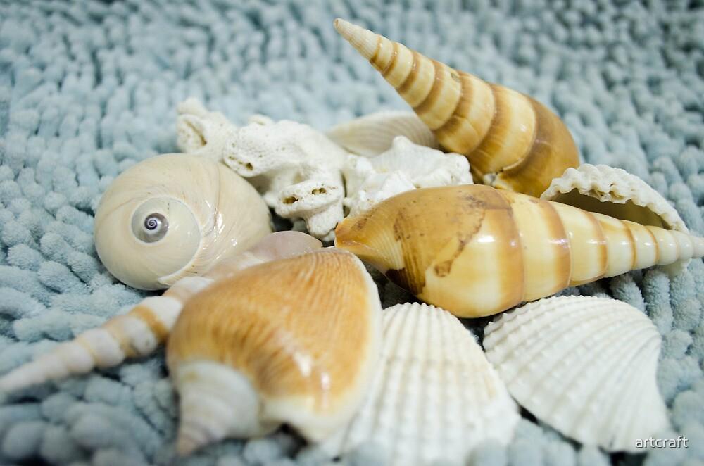 Seashells! by artcraft