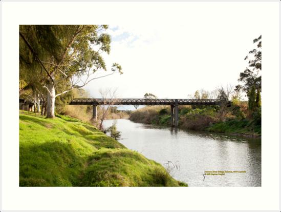 Historic Bridge, Paterson River at Paterson by SNPenfold