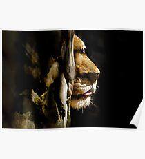 LION PEEKS AROUND THE CORNER Poster