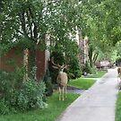 Hotel Bucks in Ouray by Liane6161
