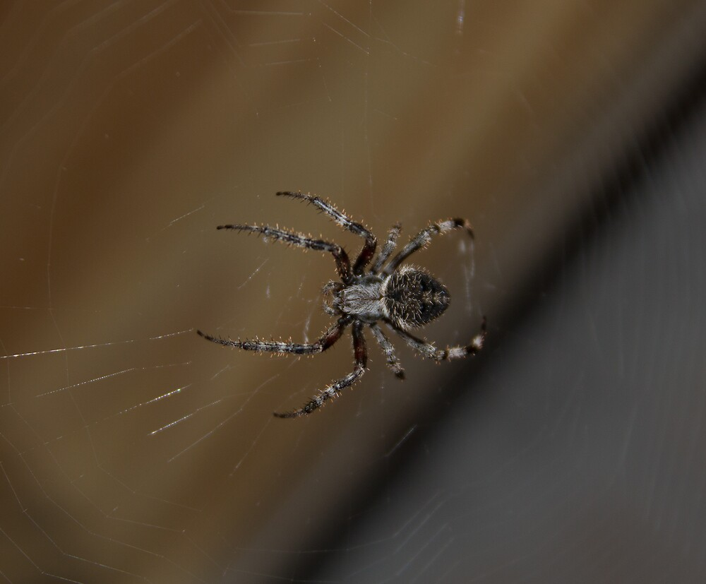 Large Spider by Dominic Perry