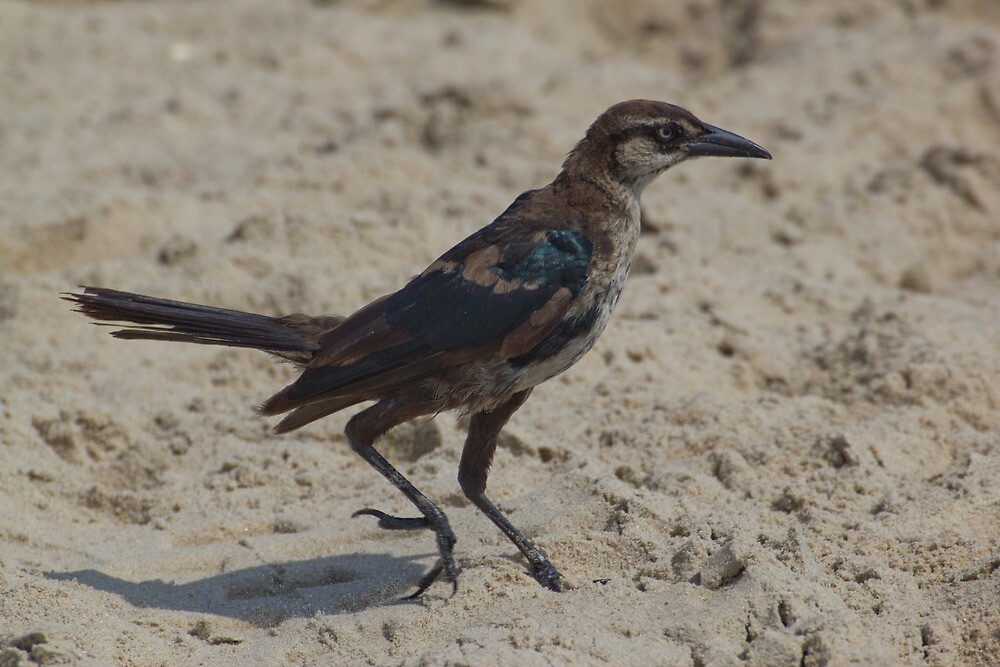 Bird on the Sand by Dominic Perry