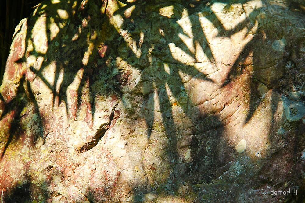 leaves on rock by demor44