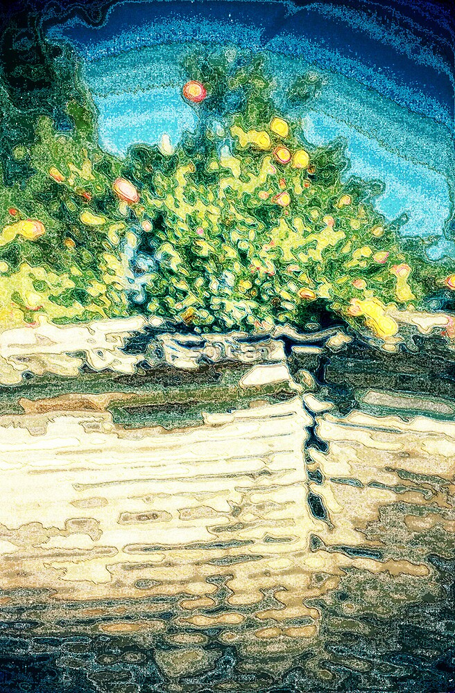 A scenery with summer oranges by sou-an