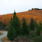 Hanmer Springs, Autumn  by Jay Armstrong