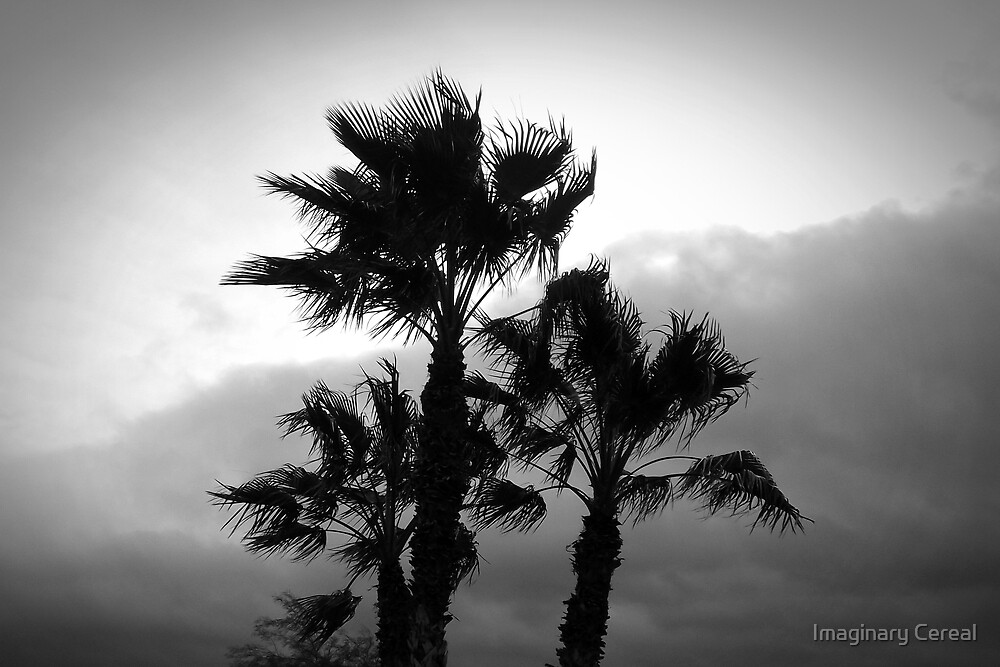 Palms in the Wind by Imaginary Cereal