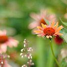 Flower by Lisa Williams