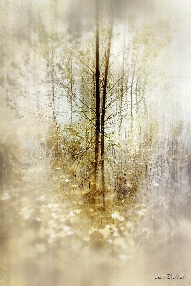 Forest of Dreams by Jan Glover