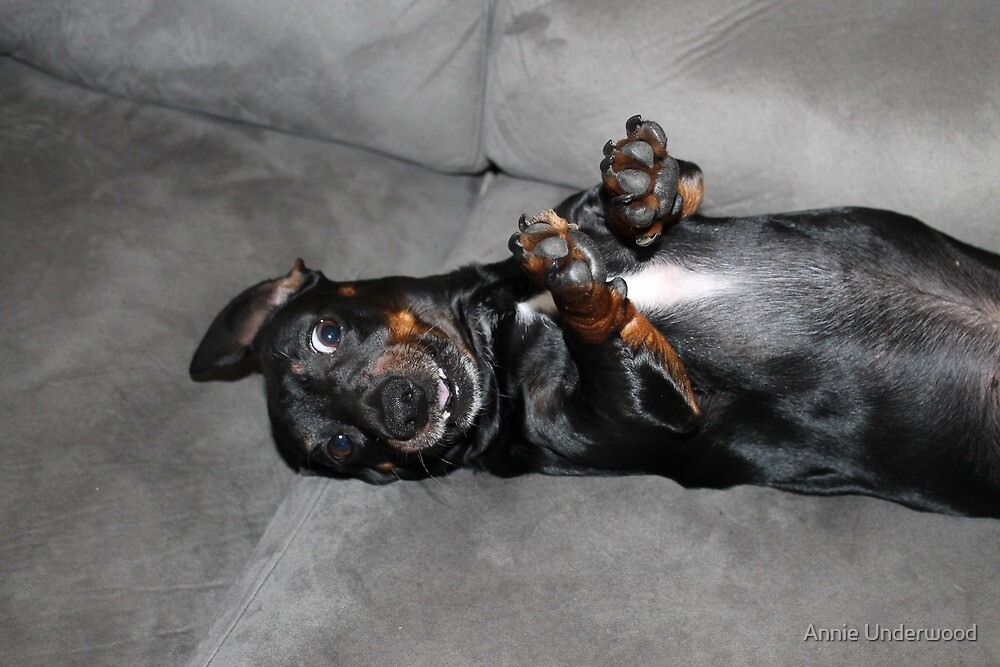 Goofy Doxie by Annie Underwood