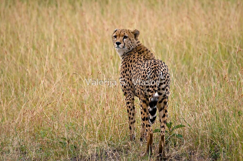 Cheetah Star by Valerija S.  Vlasov