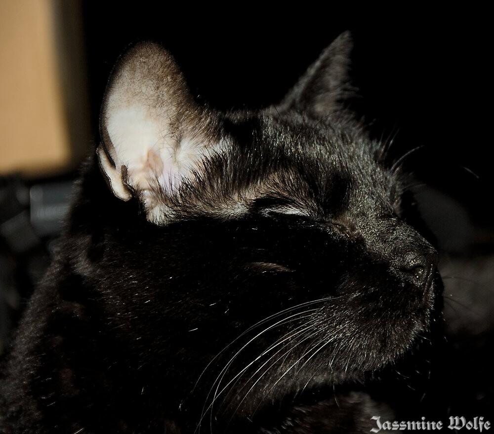 Sweet Kitty by BlackTopaz