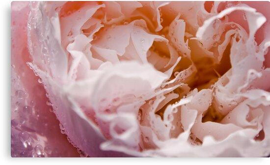 Beautiful Flower by GregWhite83