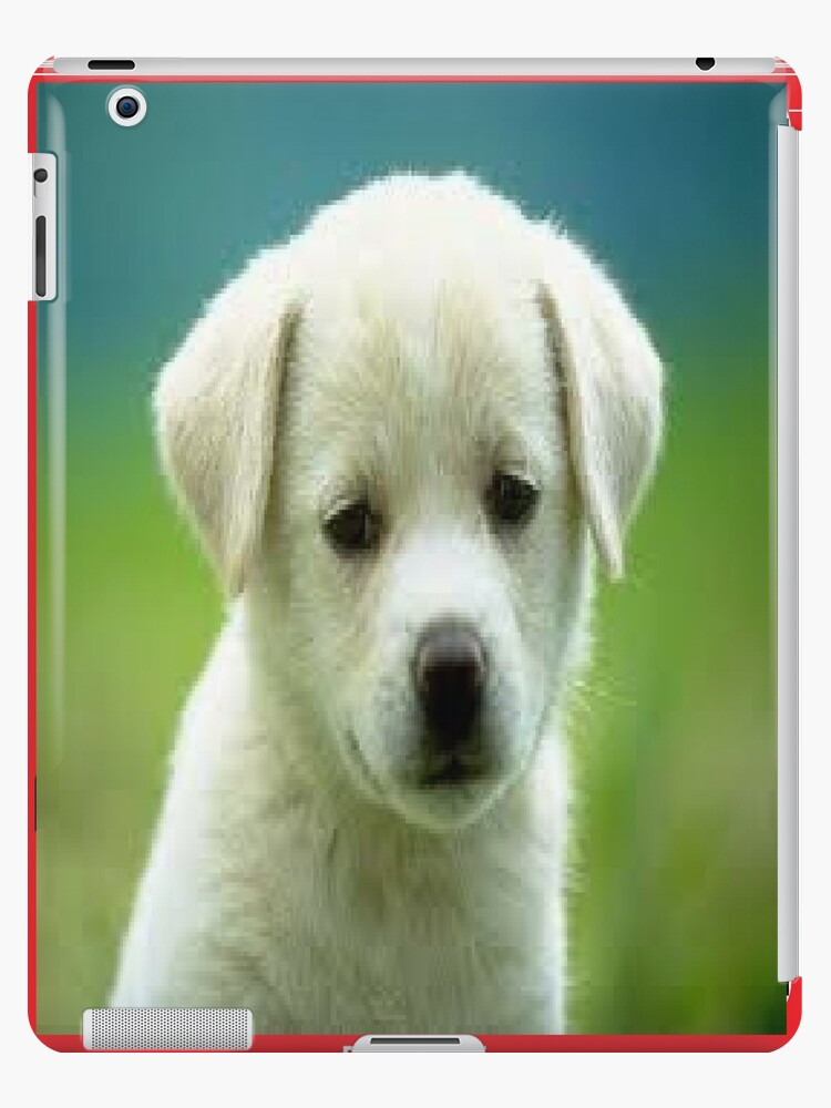 Puppy!!! by AlexanderCoburn